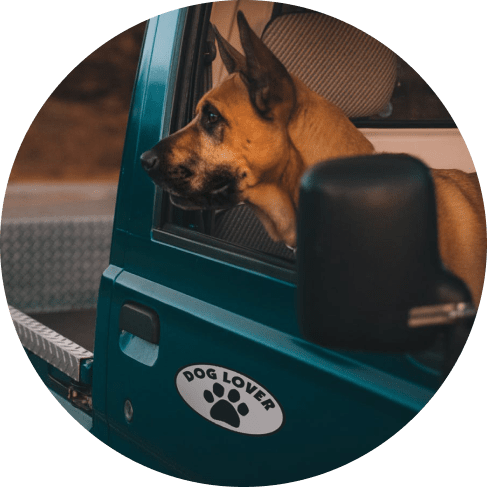 Dog Lover Oval Car Magnet Car Accessories Dog Lover