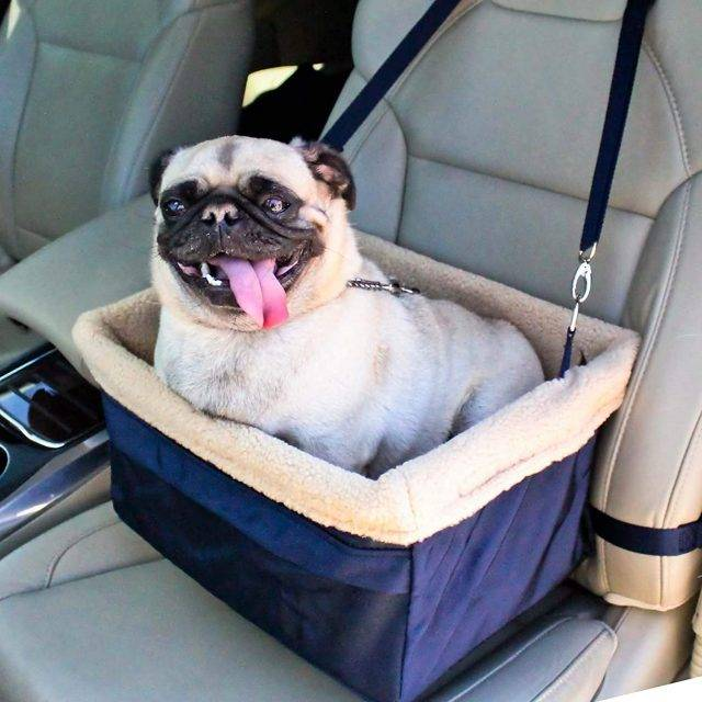Finding The Best Front Seat Cover For Dogs