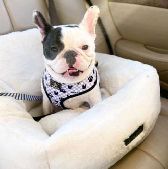 Ivory Cloud Car Seat Best dog car seat cover Car Accessories 12 ivory