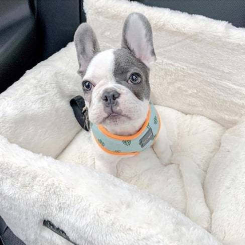 Ivory Cloud Car Seat Best dog car seat cover Car Accessories 9 ivory